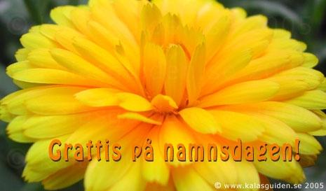 grattiskort namnsdag Skicka ekort gratis   Grattiskort   Namnsdag grattiskort namnsdag
