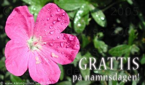 grattis på namnsdagen kort Skicka ekort gratis   Grattiskort   Namnsdag grattis på namnsdagen kort