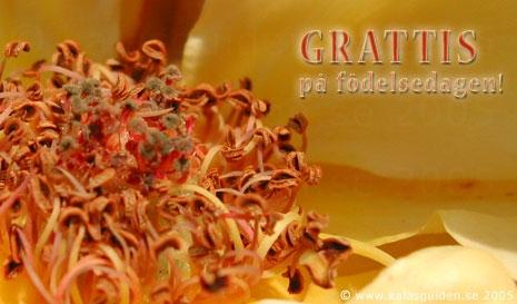 Skicka Ekort Gratis Grattiskort Fdelsedag